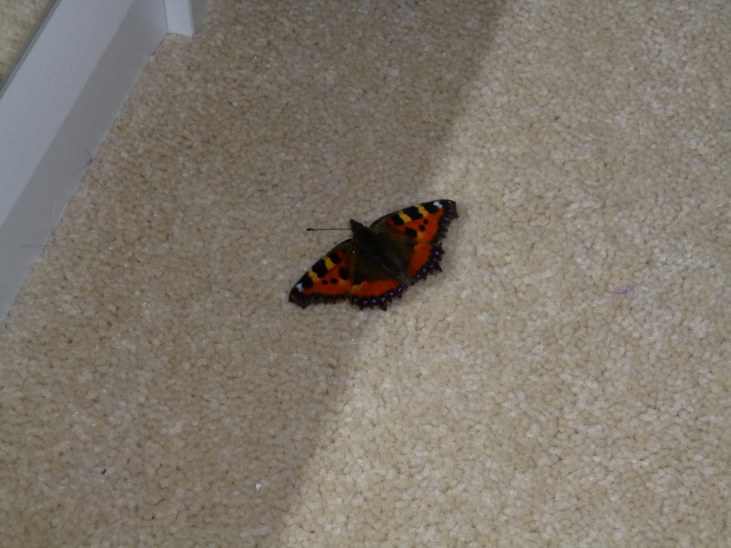 Butterfly on the floor