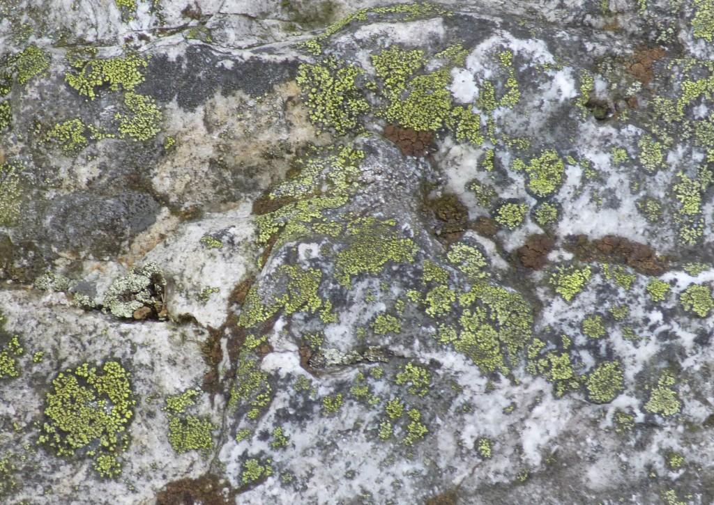 ......nice lichen....