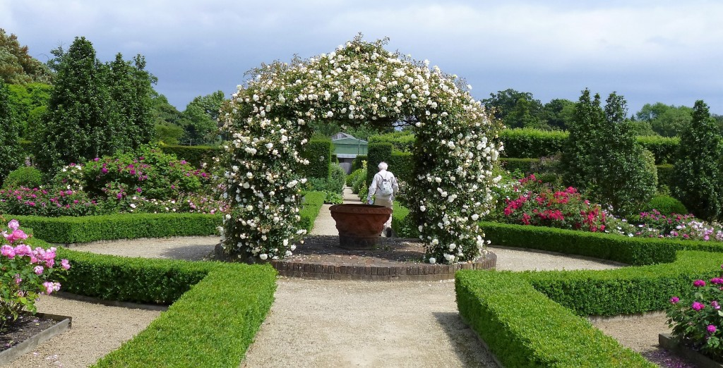 Rose garden, Loseley Park