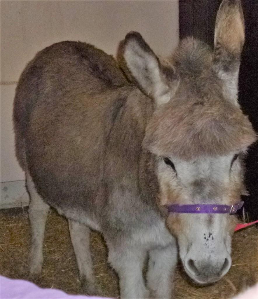 The donkey - Jasmine