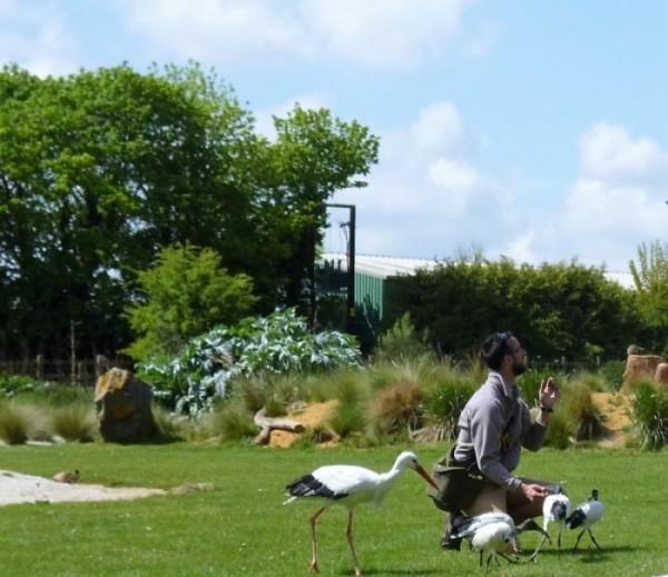 Stork, sacred ibis (and meerkat?)