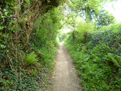 ....attractive sunken paths, with deep banks with ferns growing on them.