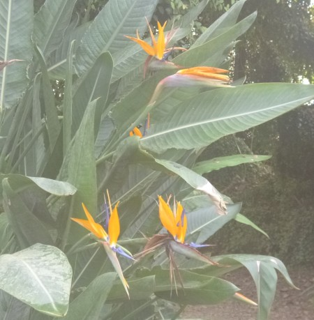 ......and bird-of-paradise flowers.
